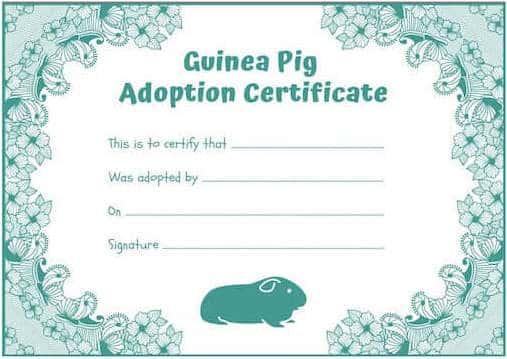 guinea-pig-adoption-certificate