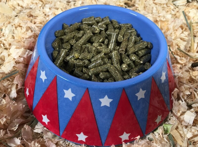 Small non-tip guinea pig food bowl filled with pellet food