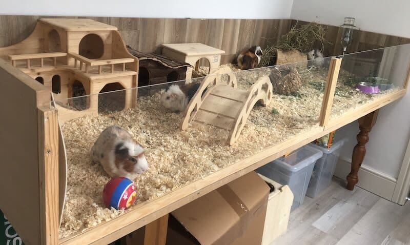 Extra large homemade wooden guinea pig cage with perspex front