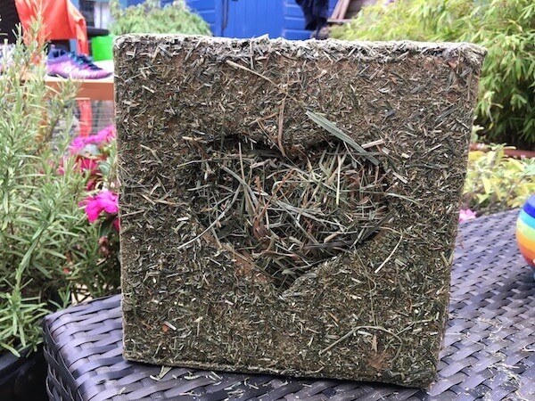 Rosewood forage cube for guinea pigs