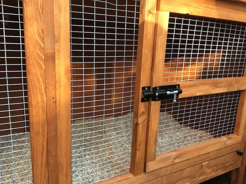 Guinea pig hutch front showing wire,  door and lock