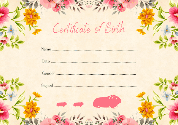 floral guinea pig birth certificate